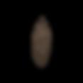 Pomme de pin 1
