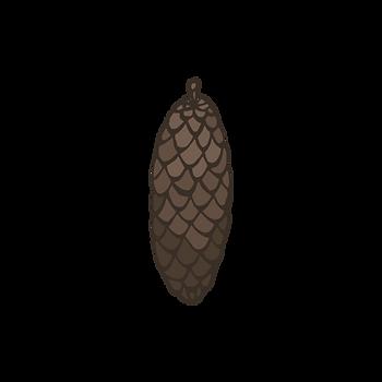 Pine Cone 1