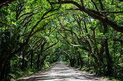 Trees.road.jpg