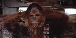 Chewie et son inspiration canine