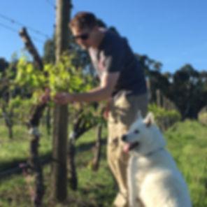 Fetherston Vintners Wine Dog Oscar and Wiemaker in Vineyard