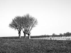 THREE TREES #2_070415_1771