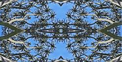 Aloe Tree CT Ultimate Final