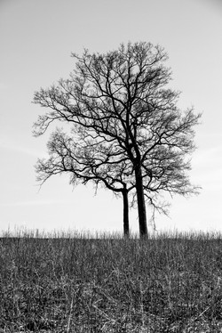 TWO TREES 070415_1773