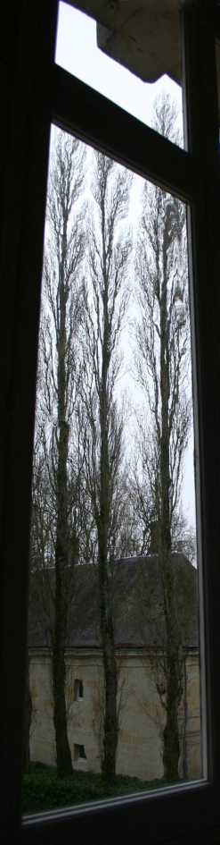 Paillard Trees Working Dodge