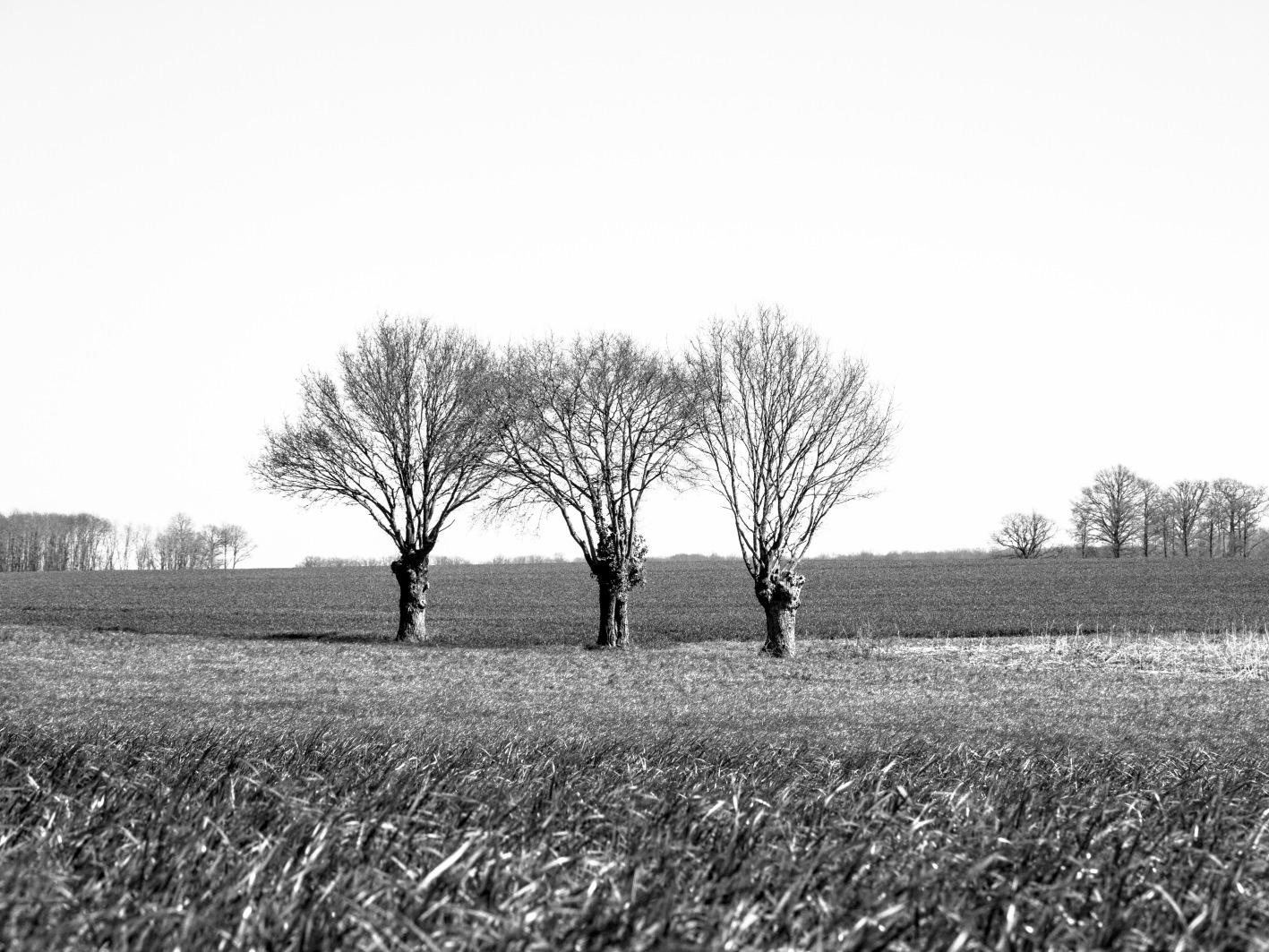 THREE TREES 070415_1766