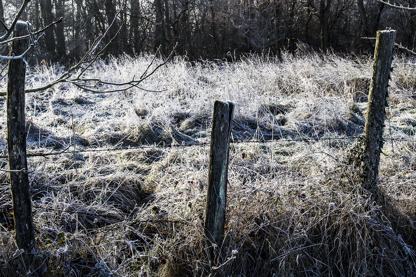 Posts in Frost 60x90