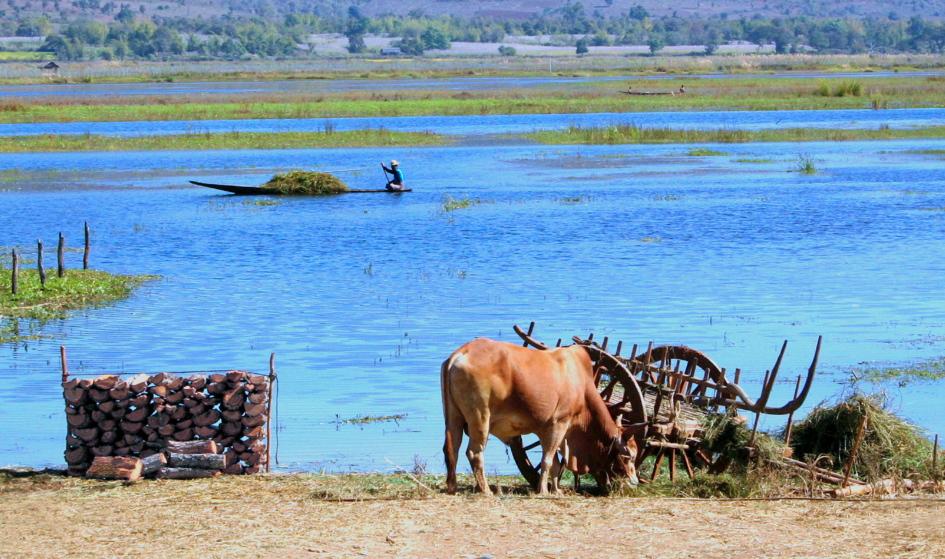 Buffalo and Boat