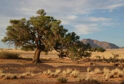 Tree & Hill