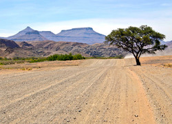 Roadscape with Tree
