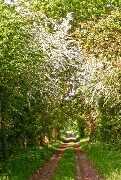 Arborage