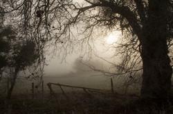 Mist Tree & Fence