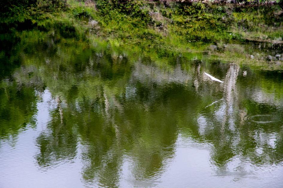 BIRD AT LAKE OTJIKOTO