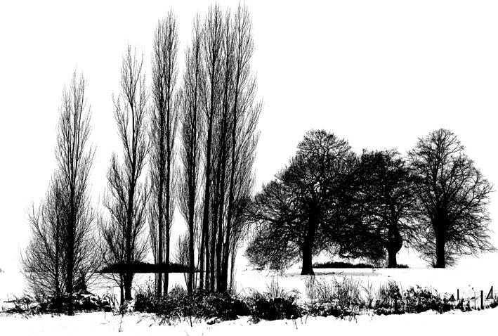 Hampstead Heath Feb 2012 B&W