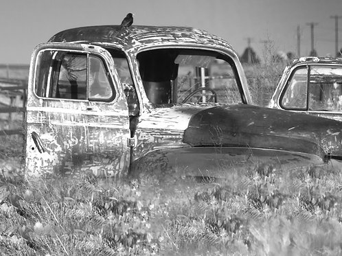 Black and White old car portrait with Bird
