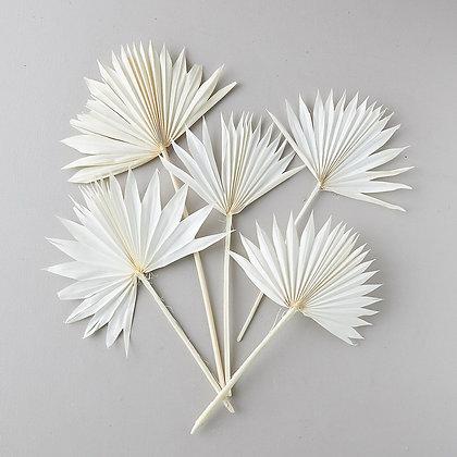 FAN PALM stems | White & Natural