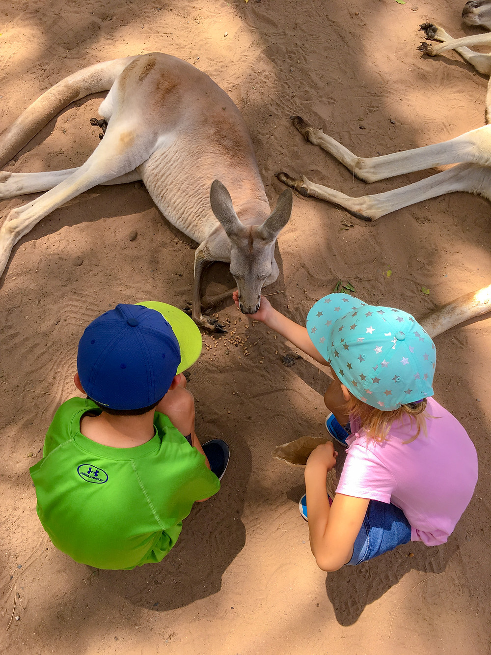 How to Survive Deadly Australia with Kids with the Transparent Travelers at www.transparenttravelers.com
