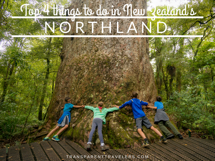 Top 4 Things to do in New Zealand's Northland