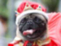dog show 2.jpg