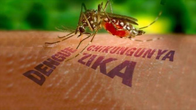 Dengue, chikungunya e zika ameaçam 165 municípios baianos