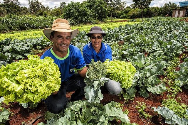 CNPq destina R$ 10,7 milhões a projetos de agroecologia