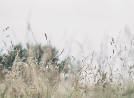 INSTAGRAM Bloom: una guida per tutte le creative (timide)!