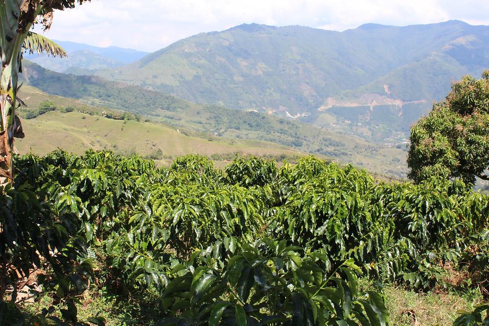 Colombia Coffee Farm