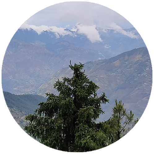 A Tibetan Christmas Tree planted in Himalayas        + 25 years of Treebuddycare