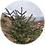 Thumbnail: A Tibetan Christmas Tree planted in Himalayas        + 5 years of Treebuddycare