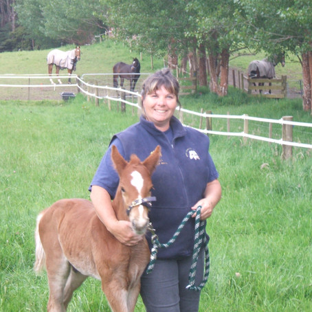 'Nudging' your horse to achieve successful training outcomes