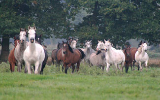 Reducing the Negative: Why equine emotions such as Fear and Anxiety have no place in good training