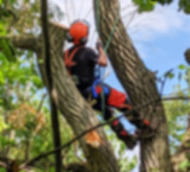 Our certified arborists are skilled at what they do. Whether you need a tree climbed, a tree removed via bucket truck, a stump ground, a lot cleared, a hedge trimmed, or even an arborist report we are here to help!