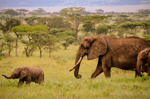 Life Instants Photography Adventure Travel Print Tanzania Elephant