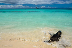 Life Instants Photography Adventure Travel Print Galapagos Seal