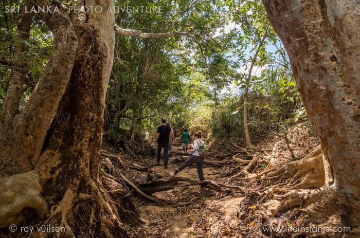 Photography Adventure Travel Sri Lanka Jungle