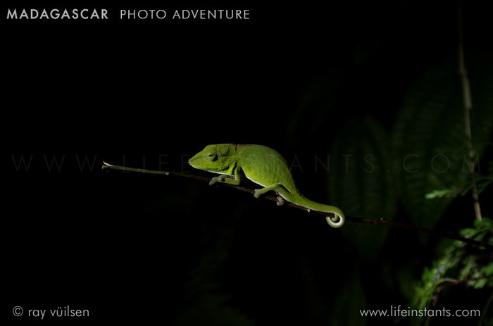 Photography Adventure Travel Madagascar Chameleon