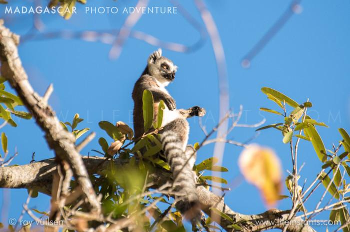 Photography Adventure Travel Madagascar Lemur