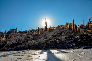 Life Instants Photography Adventure Travel Print Bolivia Uyuni Cactus