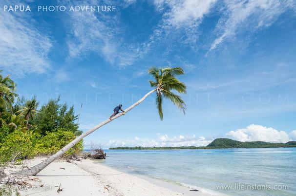 Photography Adventure Travel Papua Beach Palmtree