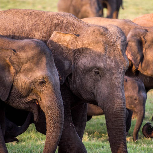 Life Instants Photography Adventure Travel Private Trips Memorable Experiences Elephants