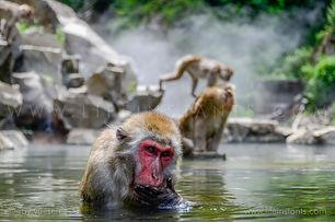 Life Instants Photography Adventure Travel Print Japan Monkey