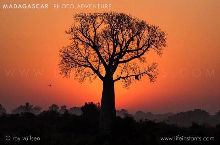 Photography Adventure Travel Madagascar Baobab