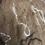 Thumbnail: Orkney Scarf