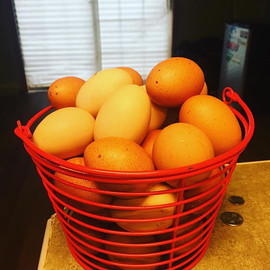 Im going to need a bigger basket soon.jp