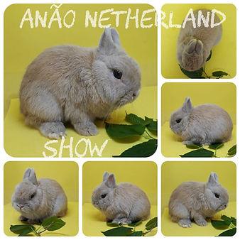Anão_Netherland_Show.jpeg