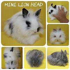 Mini Lion Head.jpeg