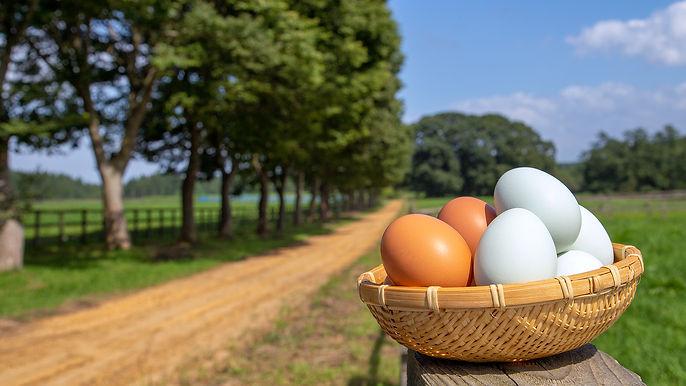 top_egg.jpg