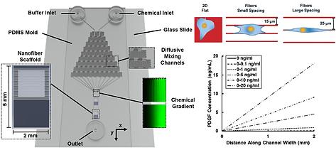 Integrating nanofibers with biochemical