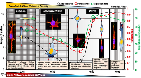 Crosshatch nanofiber networks of tunable