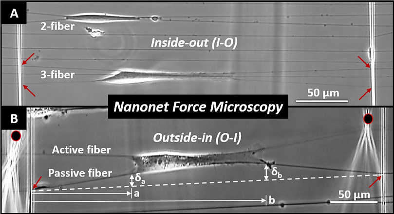nanonetforce microscopy.png